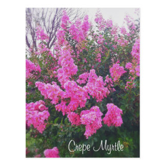 Pink Crepe Myrtle Nature Art Photo with Text Postcard