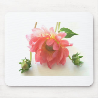 pink dahlia and buds mouse pad