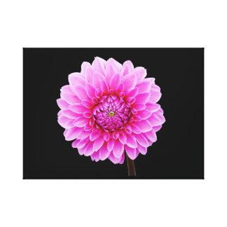 Pink dahlia canvas