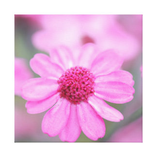 Pink Daisies Gallery Wrap Canvas