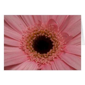 Pink Daisy Closeup Notecard Cards