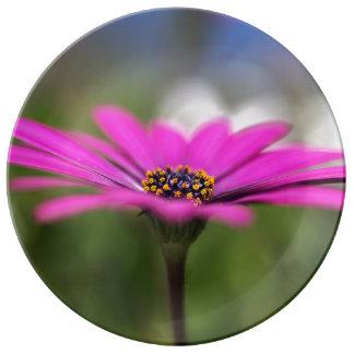 Pink Daisy Flower Porcelain Plate