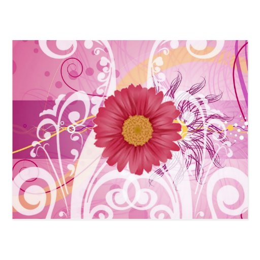 Pink Daisy Flowers Pictures Design Postcards