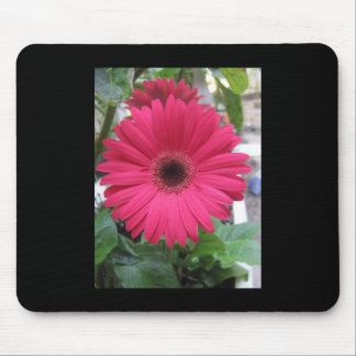 Pink Daisy Mouse Pads