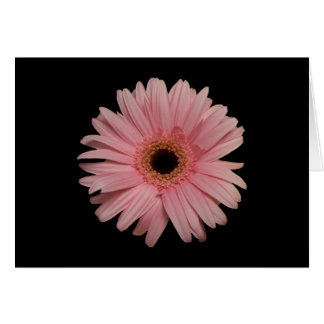 Pink Daisy Notecard Greeting Card