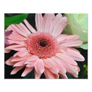 Pink Daisy Photographic Print