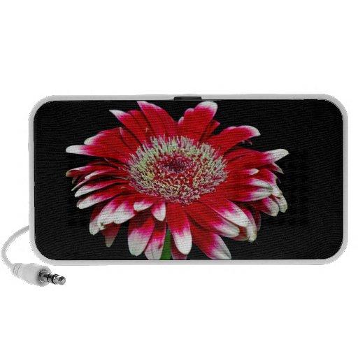 pink daisy notebook speaker