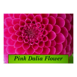 Pink Dalia Flower Posters