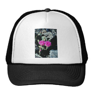 Pink Death Valley - Prickly Pear Cactus flowers Hats