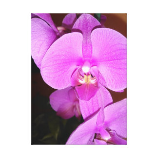 Pink Dendrobium Orchid Canvas Print