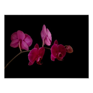 Pink Dendrobium Orchid - Customized Flowers Poster