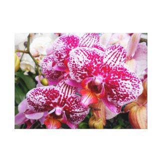 Pink Dendrobium Orchids Canvas Print