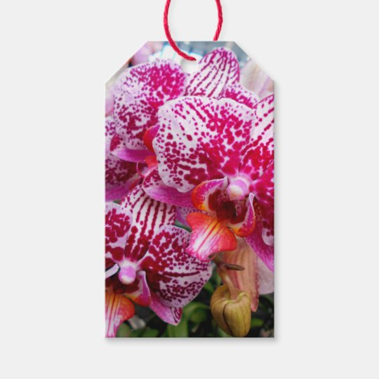 Pink Dendrobium Orchids Gift Tags