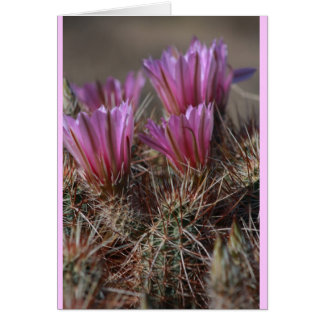 Pink Desert cactus bloom Card