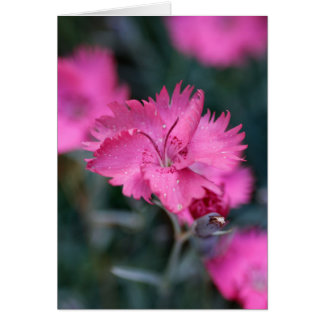 Pink dianthus card