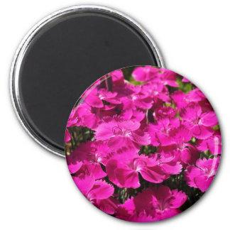 Pink Dianthus Flowers Magnet