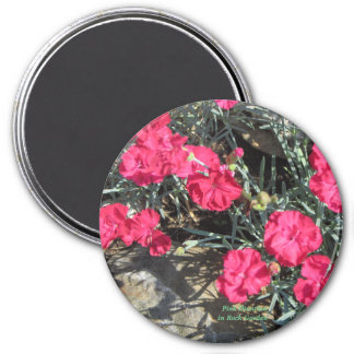 Pink Dianthus in Rock Garden Magnet