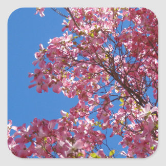 Pink Dogwood and Blue Sky Square Sticker