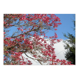Pink Dogwood Blooms and Sky With Tall Pine Closeup Pack Of Chubby Business Cards