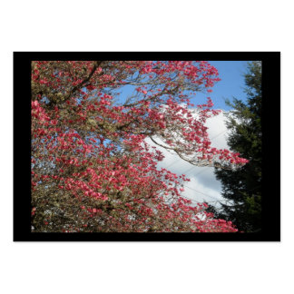Pink Dogwood Blooms and Sky With Tall Pine frame Pack Of Chubby Business Cards