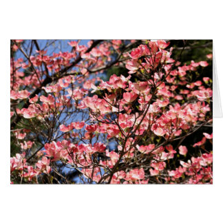 Pink Dogwood Blossoms Flower Photography Card