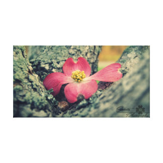 Pink Dogwood Canvas Print