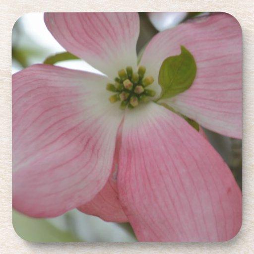Pink Dogwood Flower Coaster