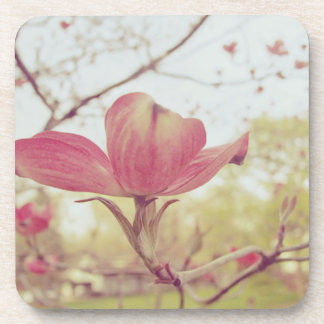 Pink Dogwood Flower Drink Coasters