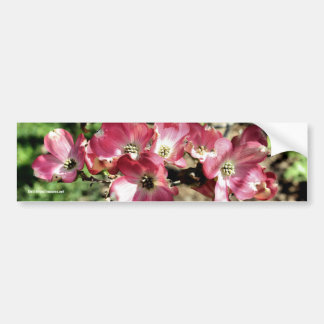 Pink Dogwood Flower Photo Bumper Sticker Car Bumper Sticker