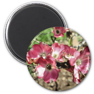 Pink Dogwood Flower Photography Magnet