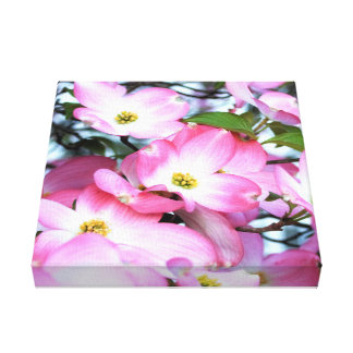 Pink Dogwood Flowers Canvas Print