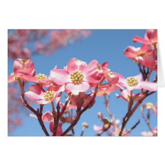 Pink Dogwoods Note Card