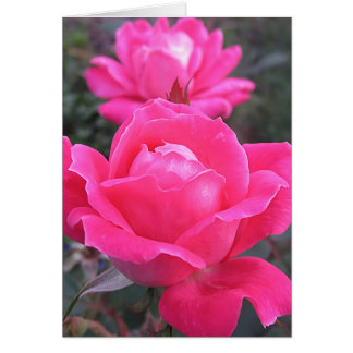 Pink Double - Roses Card