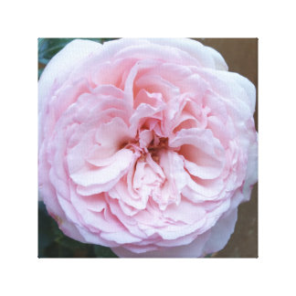 Pink Eden rose photography print on canvas