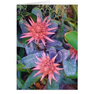 Pink Exotic Blossoms Plant Greeting Card