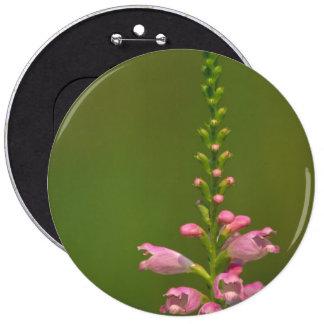 Pink False Dragonhead Flower Button