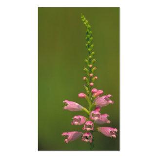 Pink False Dragonhead Flower Business Cards