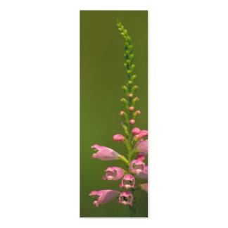 Pink False Dragonhead Flower Business Card Templates