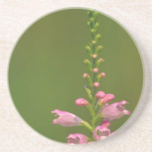 Pink False Dragonhead Flower Drink Coasters
