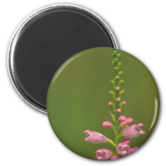 Pink False Dragonhead Flower Fridge Magnets