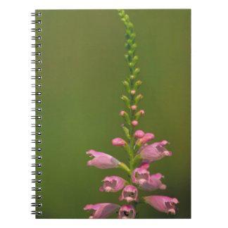 Pink False Dragonhead Flower Journals