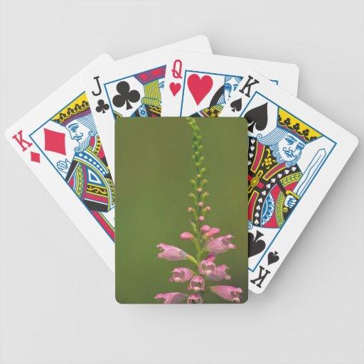 Pink False Dragonhead Flower Bicycle Poker Deck