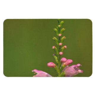 Pink False Dragonhead Flower Magnets