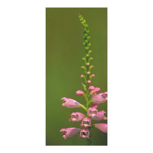 Pink False Dragonhead Flower Custom Rack Cards