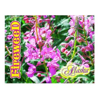 Pink Fireweed flowers in Alaska Postcard