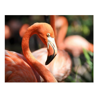 Pink Flamingo Bird Postcard