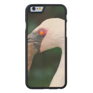 Pink Flamingo Carved Maple iPhone 6 Case