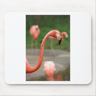 Pink Flamingo Mouse Pads