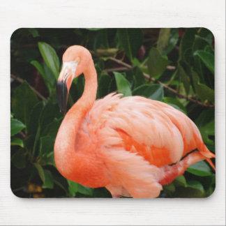Pink Flamingo  Mouse Pad