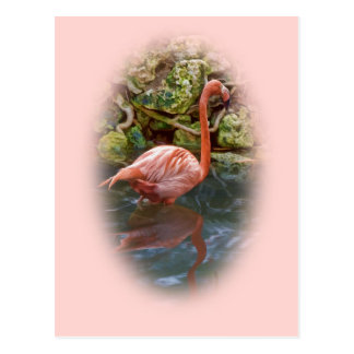 Pink Flamingo Reflected in River Postcard